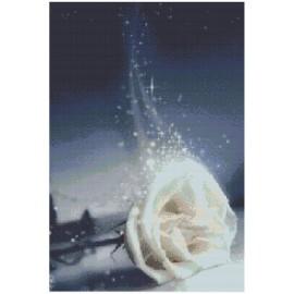 """Schema """"Rosa bianca"""""""