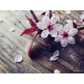 Donna con fiore
