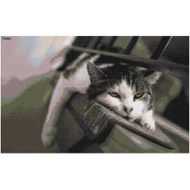 "Schema ""Gatto stanco"""